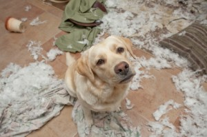 dog chewed up a comforter