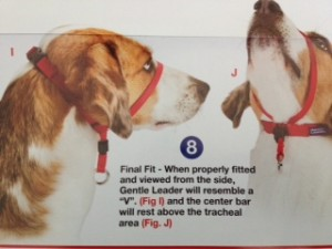 The Gentle Leader Head Collar